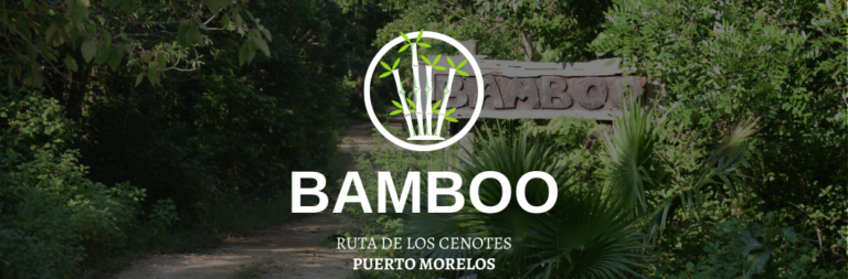 bamboo portada